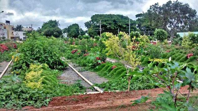 A lovely green patch at the site of the soil biotechnology plant at Herohalli tank / The Hindu