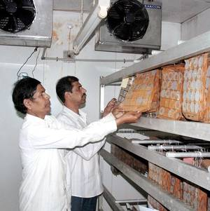 Eggs stored in a coldstorage unit of the Sericulture Department in Hassan.Prakash Hassan