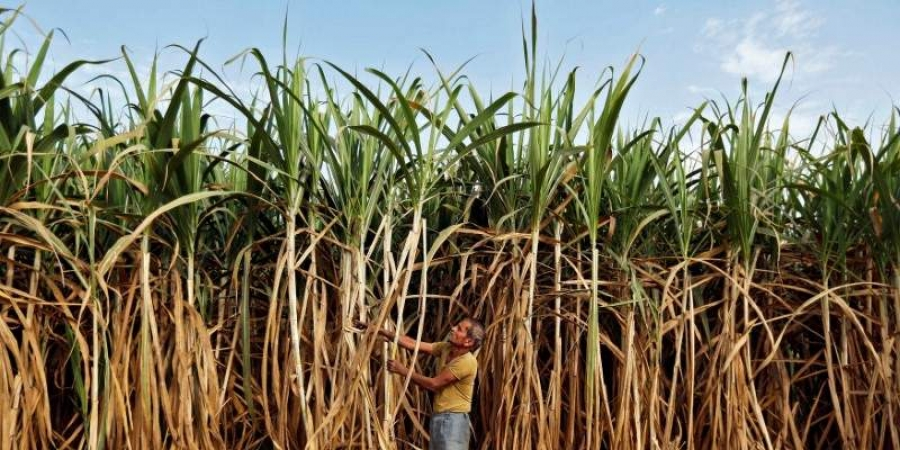 A farmer works in his sugarcane field (File | Reuters)